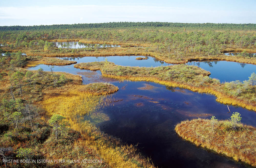 pEAT BOGS ESTONIA ECOSCENE