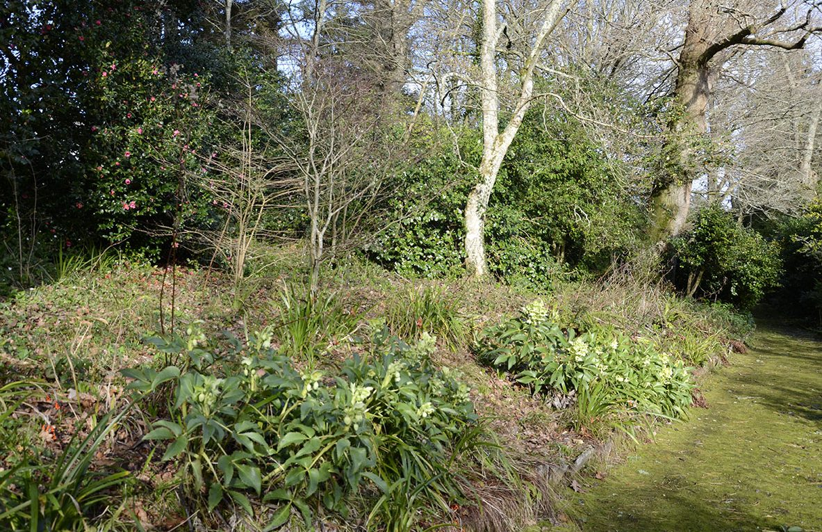 woodland walk dartington spring